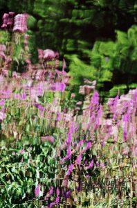Demoiselles en Fleurs.Emmanuelle Prosper