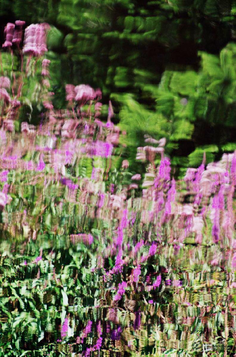 Demoiselles en Fleurs