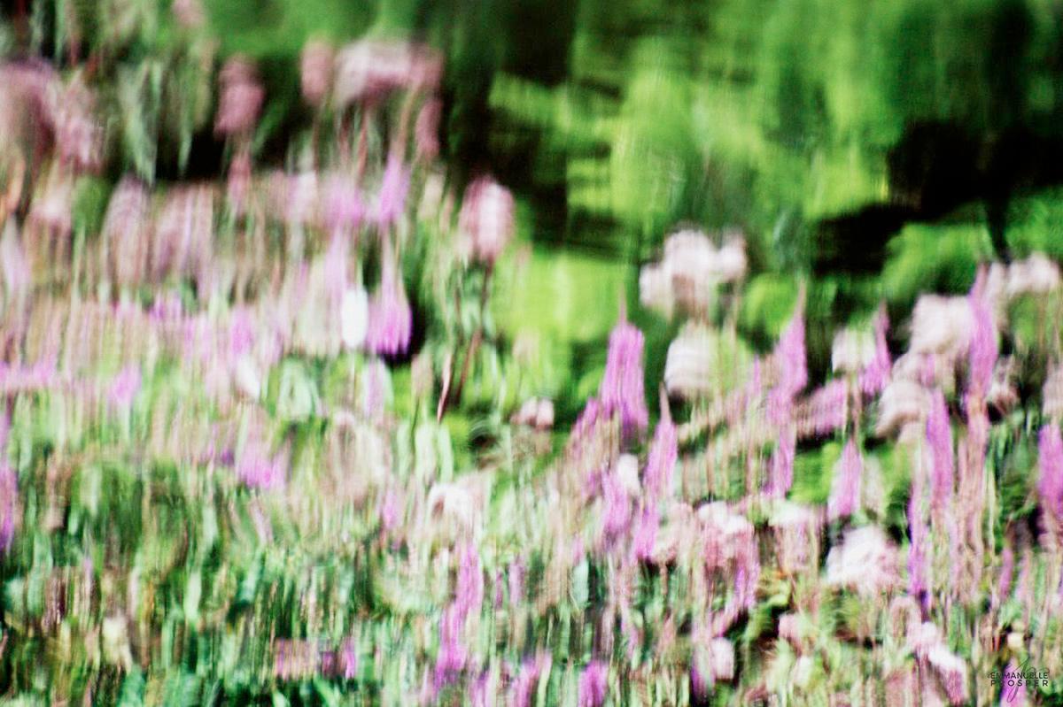 Jardin des Plaisirs   Emmanuelle Prosper