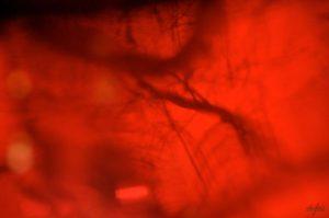 Nervures.Emmanuelle Prosper