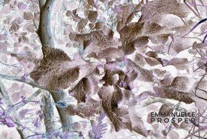 Bois Magique et Poétique.Emmanuelle Prosper