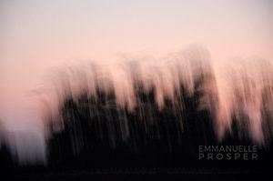 Elévation.Emmanuelle Prosper