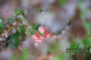 Hidden.Emmanuelle Prosper