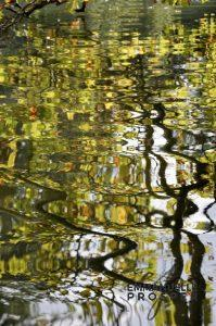 Klimt.Emmanuelle Prosper