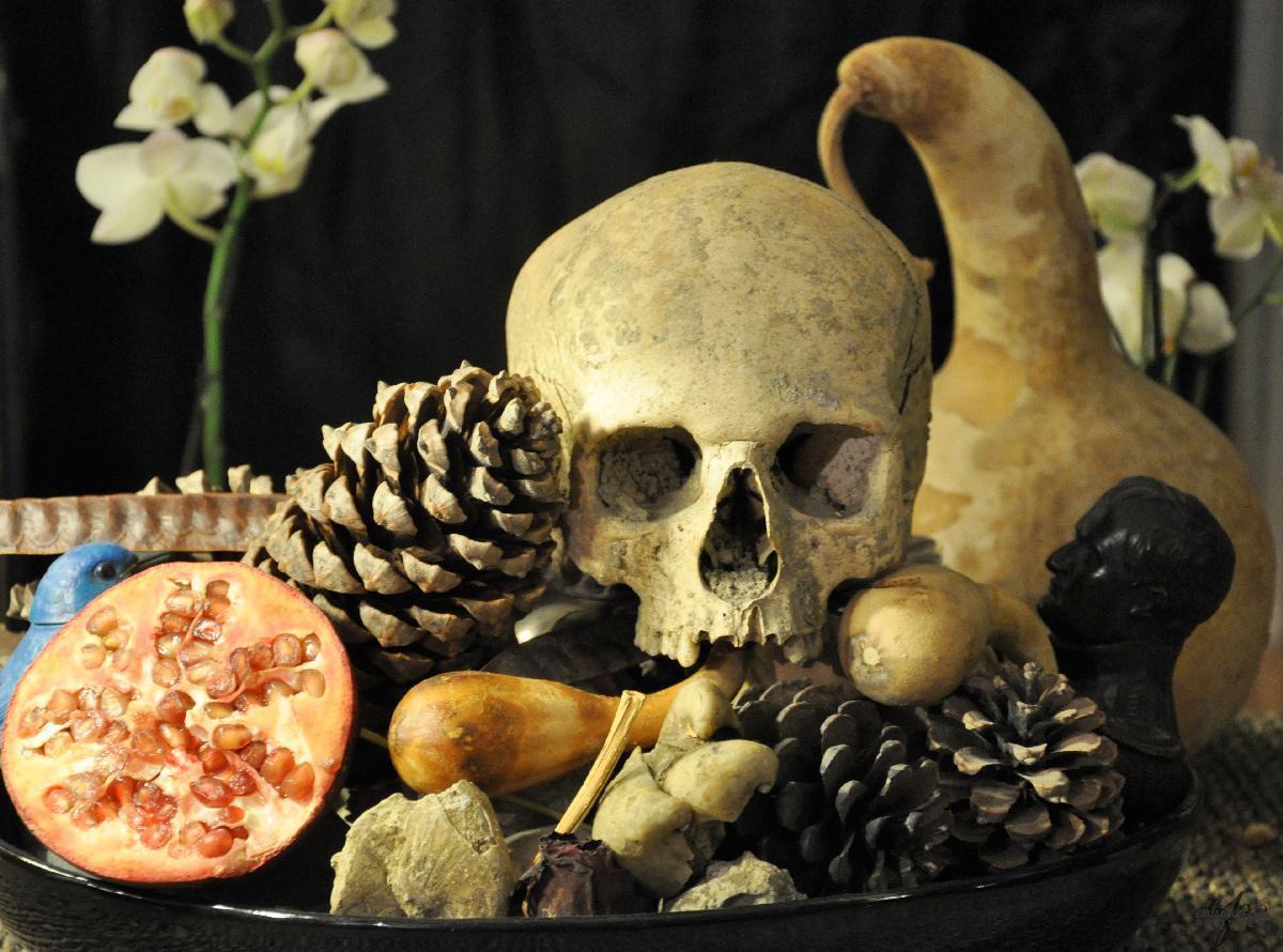 Nature Morte| Emmanuelle Prosper