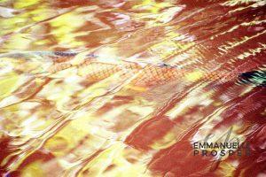 Gold Fish.Emmanuelle Prosper