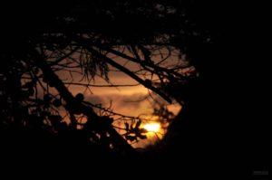 Silent Night.Emmanuelle Prosper