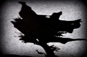 Me shadow